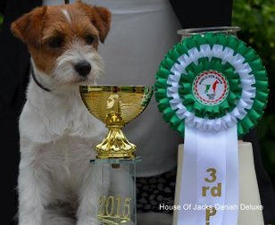 House Of Jacks Danish Deluxe 3rd. best puppyfemale at the WDS 2015 Milano and best placed Danish Jack Russell